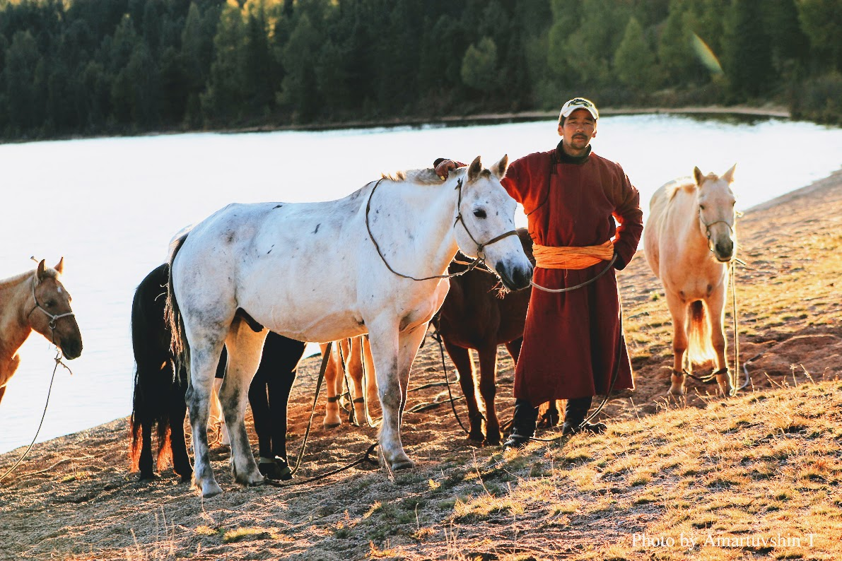Trekking horses at the Khagin Khar lake