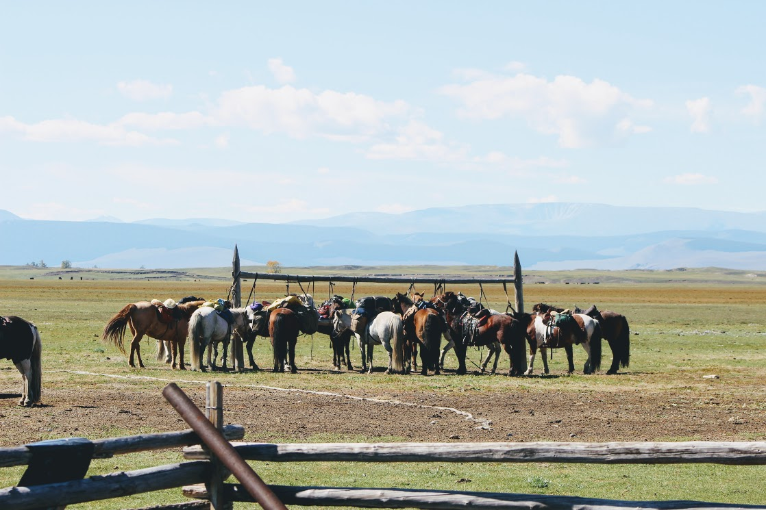 Horse Trekking tours in Northern Mongolia for 11 day with Horse Trails Mongolia 2016